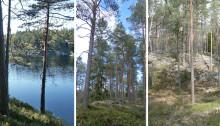 Öjersbyn blir länets första naturreservat för 2017
