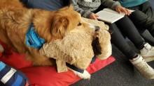 Utbildade hundar - en viktig resurs i skolan