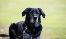 Ta hand om den äldre hunden