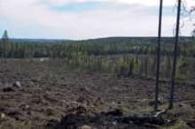 SLU och Skogforsk mäter kvicksilver i norr
