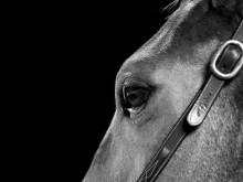 Miljön fortsatt i fokus under Gothenburg Horse Show 2018