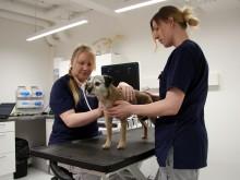 Eläinlääkäriin pääsee aina – Eläinsairaala Veter valvoo lemmikkien tähden