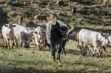 Kvalitetskött får Allt om Mat:s Stora matpris 2014