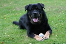 Terapihundar ska öka intresset för omsorgsutbildningar
