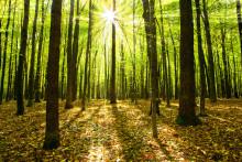 AutoMester indgår landsdækkende samarbejde med Plant et Træ om tusindvis af nye træer i Danmark