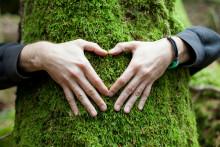 Älska Skog öppnar ögonen för den svenska skogen