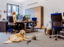 "Aktionstag ""Kollege Hund"": Bei Fressnapf gilt das an jedem Tag"