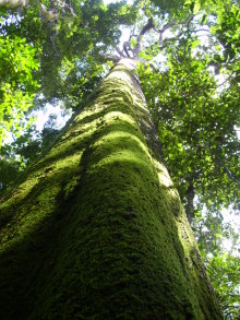 Peugeots succesfulde salg af CO2-kvoter i Amazonas giver 1.000.000 €, som doneres direkte og ubeskåret til den fortsatte bæredygtige udvikling