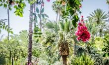 8 Days Yoga Retreat Green Marrakech March 2018