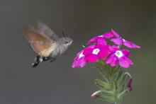 'Nye' insekter spiller danskerne et pus i varmen