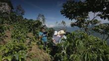 Studie visar att Rainforest Alliances app kompetensutvecklar odlare utan internetanslutning