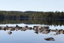 Analysen av kräftfynd i Skara klar: Det var inte marmorkräftor utan signalkräftor