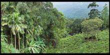 En film om hur srilankesiska teodlare arbetar för ett hållbart jordbruk