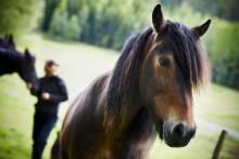 Hästens välbefinnande vårt fokus på Eurohorse