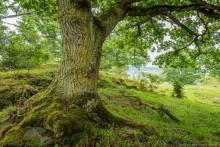 """Sju aktörer i gemensamt upprop - """"Vi kräver en nationell handlingsplan för Sveriges naturbetesmarker!"""""""