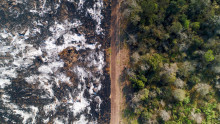 Ny undersøgelse: Overvældende flertal af europæere vil have stoppet skovrydning ved lov