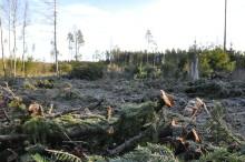 Internationella gäster på skogsexkursion i Uppvidinge