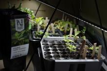 Växtbelysning är den bästa näringen