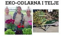 Innovativ integration skapar giftfria grönsaker i Södertälje