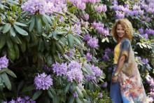 Rhododendrontider på Sofiero