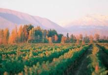 Pernod Ricardin laadukkaat viinit vauhdittavat sadonkorjuujuhlaa