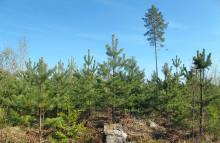 En bra kompromiss i skogen
