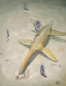 Fossil i västra Tyskland var ny havsreptil från juraperioden