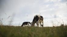 Arlas landmænd sikrer større indsigt og stærkere klimatiltag