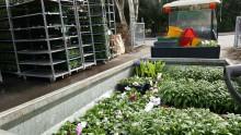 Universitetet firas med blommor och Nygatan blir blomstergata