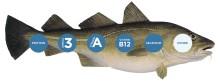 Bacalao, una fuente saludable de proteínas