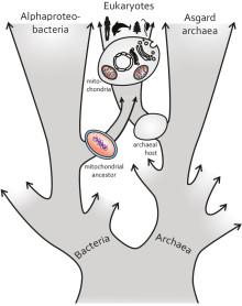 Forskare omdefinierar mitokondriens ursprung