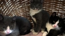 Kattens Værn på Snapchat og Instagram!