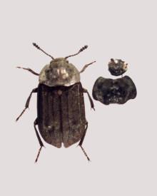 Insekter sladrer om dansk istidsvejr