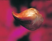 Slik planter du krokus og tulipaner til vårblomstringen