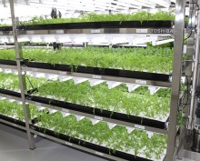 Innovating Smart Solutions for Vegetable Production
