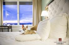 Hederspris för fyrverkerifritt nyår till Clarion Hotel Arlanda Airport