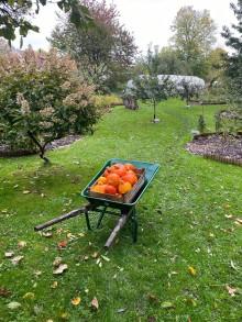 Krogens mästare i trädgården