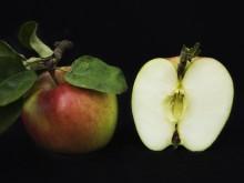 Fira Äpplets dag på Rosendals Trädgård!