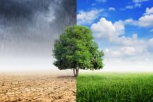Samhall halverar klimatutsläppen