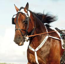 Rösta på Årets Häst
