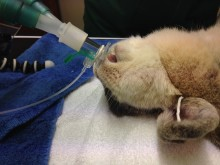 LagoLearn, reducing rabbit anaesthesia deaths