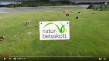 Färsk film om de svenska naturbetesmarkerna!