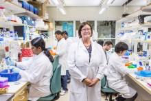 Nyupptäckt signalväg ger hopp om bättre cancerbehandling