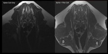 World's first veterinary dual coil MRI  - Hallmarq gives vets a clearer picture