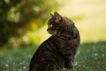 Fästingsjukdomen Borrelia har flera månaders inkubationstid på hund och katt!