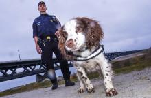 Zak är Årets narkotikasökhund igen!