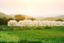 SMHI lanserar Grönt väder tillsammans med LRF Media