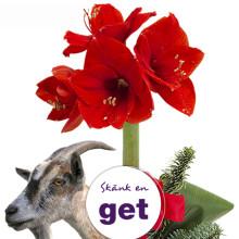 Skicka en blomma – skänk en get