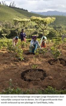 UTZ Certified gir bønder høyere utbytte og bedre produkter