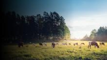 Nurmipellot ovat pohjoisen maatalouden erikoisuus − laaja suomalaishanke tähtää ilmastonmuutoksen hidastamiseen ja resurssitehokkuuteen